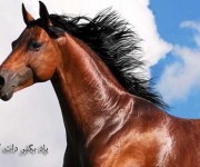 اسب زیبا