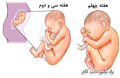 سه ماه سوم بارداری