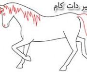 آموزش نقاشی اسب