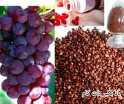 از عصاره دانه انگور بیشتر بدانید