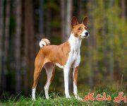 سگ نژاد باسنجی