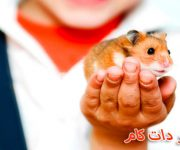موش همستر