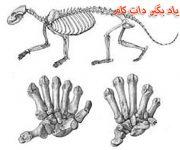نظریه های تکامل