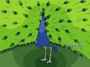آموزش نقاشی طاووس برای کودکان