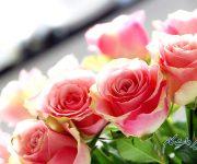 گیاهان آپارتمانی_از گل رز بیشتر بدانید