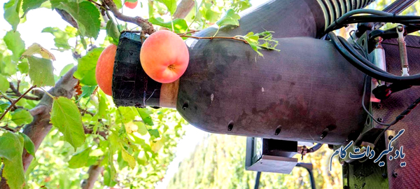 ربات سیب چین