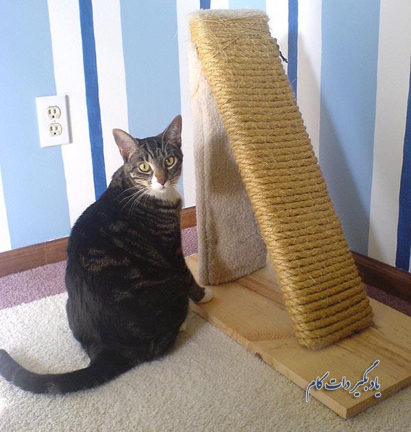 فراهم کردن ایستگاههای خاراندن برای گربه