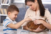 مراقبت از خرگوش خانگی