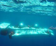 فیلم مفرح ترین زیر دریایی های شخصی