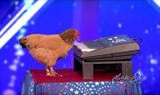 Jokgu مرغی که پیانو می زند