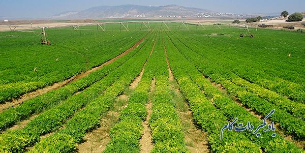 استفاده از فناوری حسگرها برای مدیریت کاشت میوه و تره بار