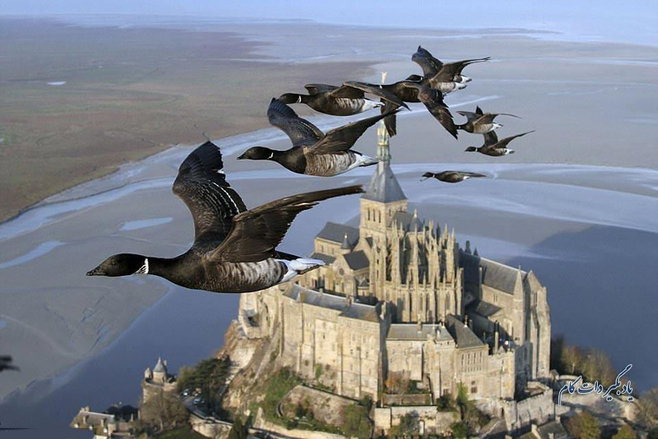 تصویری فوق العاده از کوچ پرندگان