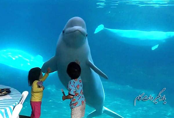 عکس العمل نهنگ سفید و دو کودک از پشت شیشه