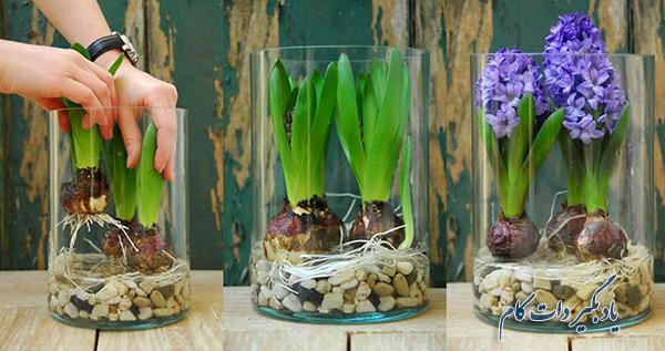 کاشت سنبل در گلدان و زمین