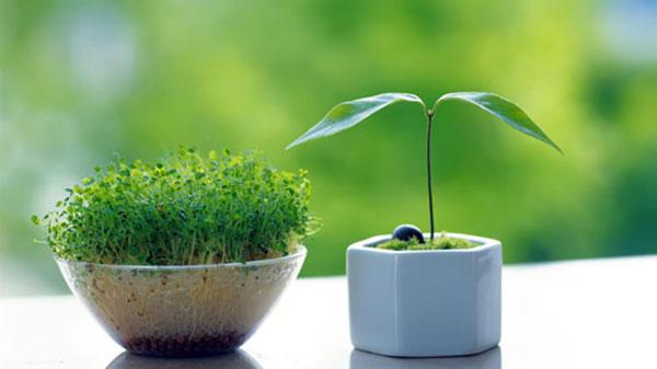سبزه بکاریم؟ سبزه نکاریم؟