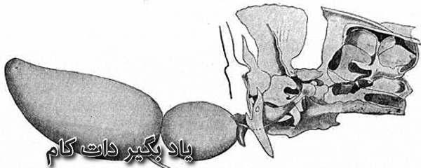 اندام وبریان گربه ماهی