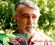 نادر نادرپور و شعر انگور