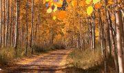 موسیقی آرامش بخش با فیلم زیبا از طبیعت