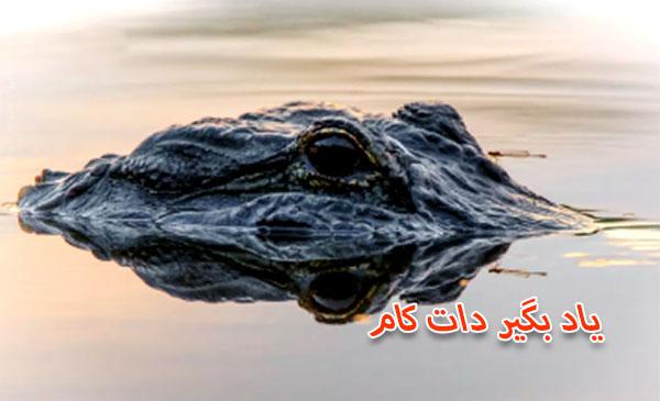 عکاسی حیات وحش f/8.0 برای اینکه تمام سر تمساح در کادر بوده