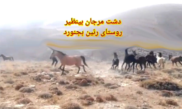 اسب های روستای رئین بجنورد