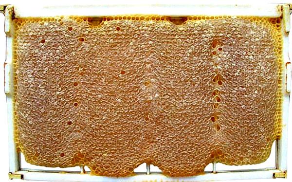 قابهای حاوی موم برای زنبور عسل