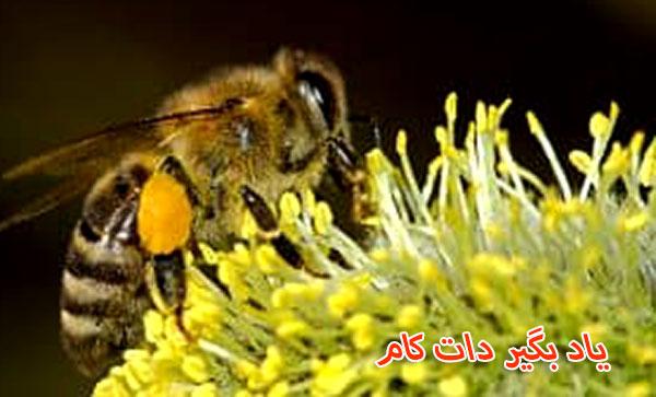 تامین منابع مورد نیاز زنبور برای تهیه عسل
