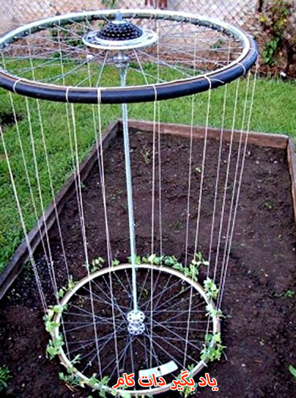 تیوپ دوچرخه برای گیاهان رونده