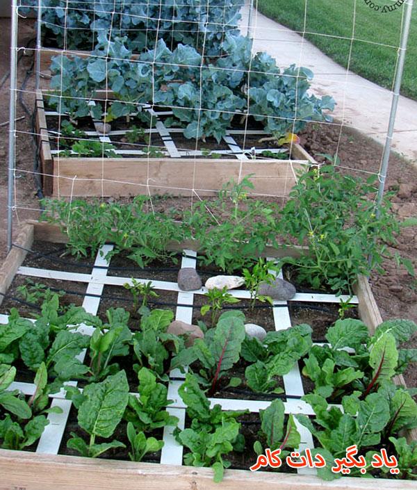 داربست نخود و گیاهان رونده