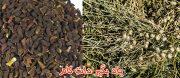 گیاه شناسی و درمانی اسپند