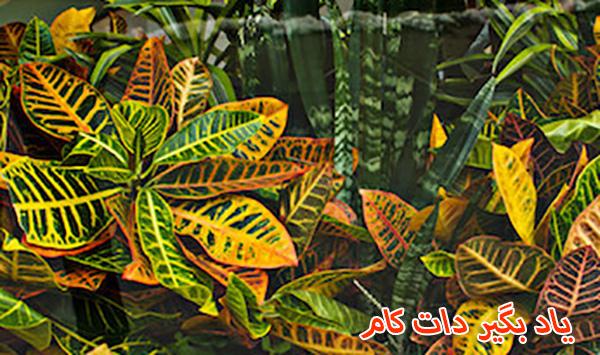 گیاه گورخری گیاه قابل پرورش در زمستان