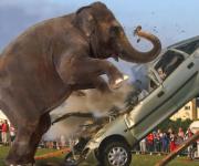 واکنش حیوانات در برابر اتومبیل