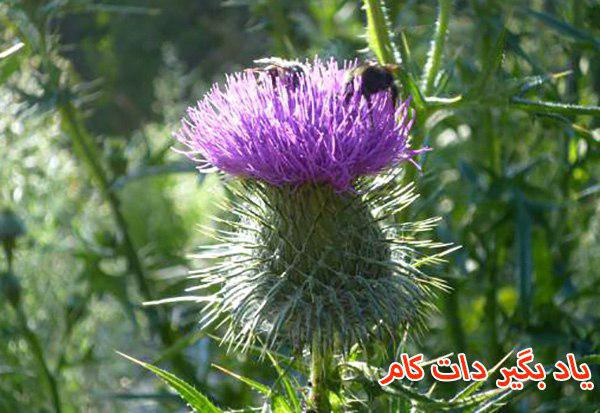 گیاهانی که زنبور به آنها محتاج است