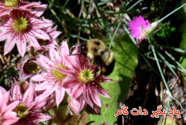 زنبور مهم برای اکوسیستم
