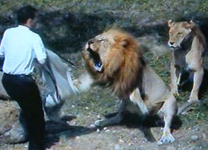 حمله شیرها خرس ها تمساح ها و دیگر حیوانات وحشی به انسان ها
