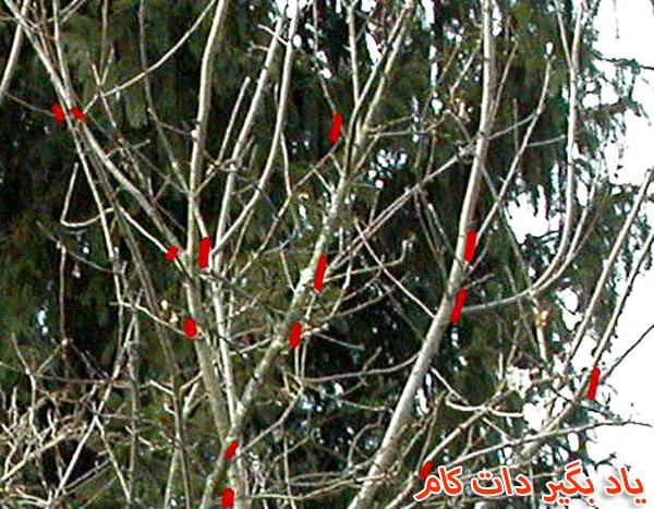 پاکسازی شاخه های در هم ریخته و نا مرتب