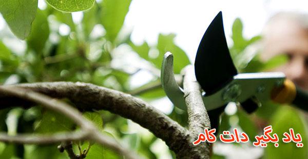 آماده سازی درخت برای هرس