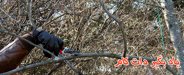 04هرس کردن و حذف مکنده شاخه ها در هرس درخت