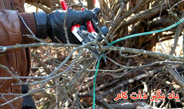 هرس کردن شاخه هایی که در آینده دچار مشکل می شوند