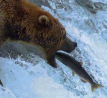 خرس های ماهیگیر صید ماهی حیات وحش