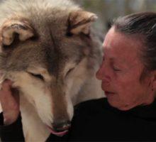 فیلم مستند زنی که از گرگ ها مراقبت می کند