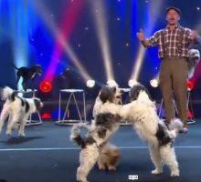 سیرک جالب و دیدنی نمایش آکروبات سگ ها خنده و سرگرمی سالم