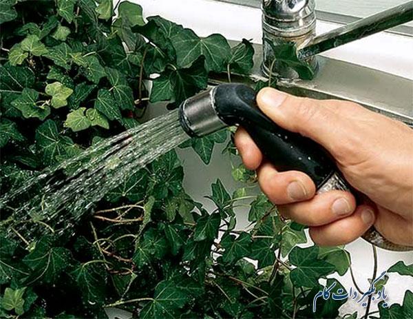 شستن گیاهان آپارتمانی در حمام