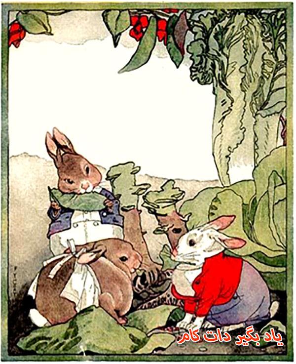 خرگوش های گرسنه در این داستان