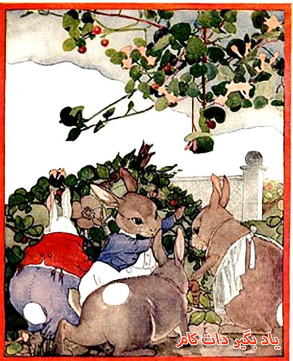 کتاب داستان خرگوش ها