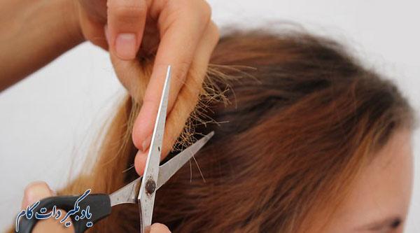 کوتاهی مو راهکاری برای کنترل موخوره