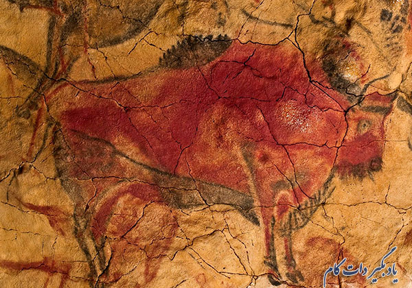 تصویر گاو میش سرخ رنگ موجود روی دیوار غار