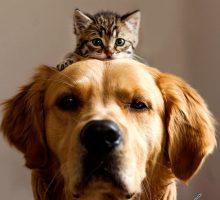 عکاسی از حیوان خانگی دقت روی خصوصیات رفتاری