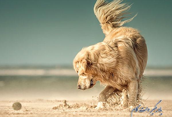 عکاسی از حیوان خانگی، نزدیکش شوید