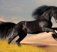 زیباترین نژاد های اسب دنیا