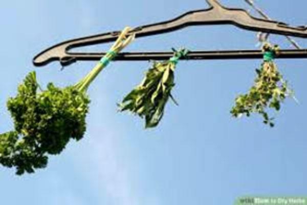 خشک کردن گیاهان دارویی در منزل